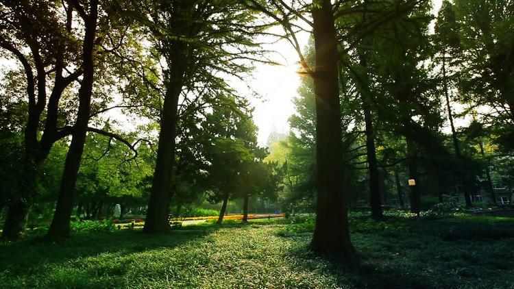 曙光透进校园的林荫